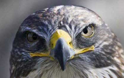 Millets Falconry Centre