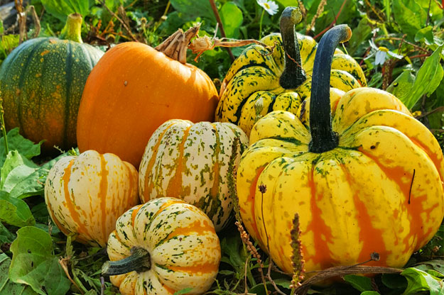 Pick Your Own Pumpkins!