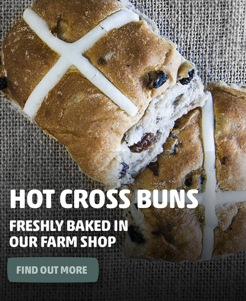 hot-x-buns-mobile