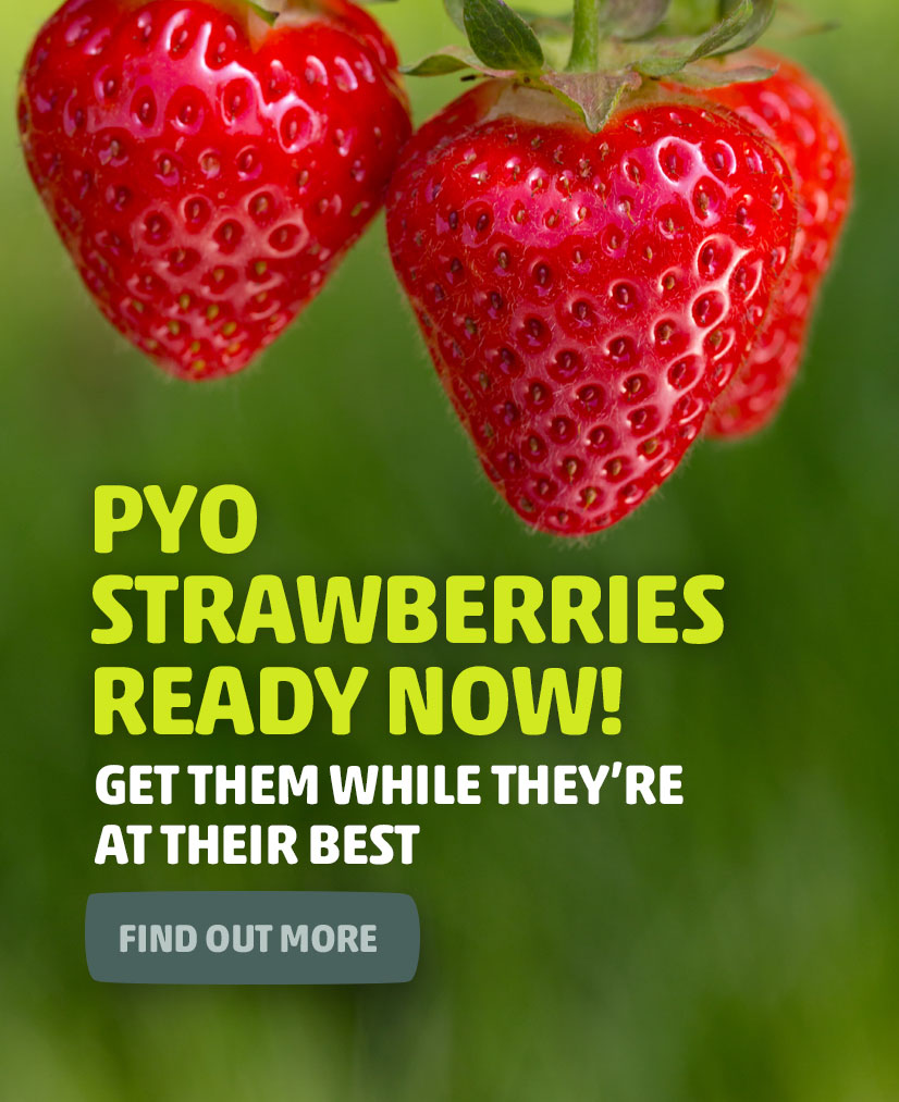 mobile-strawberries_readynow